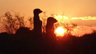 De Zeekoe Guest Farm Walk on the wildside with Meerkats!