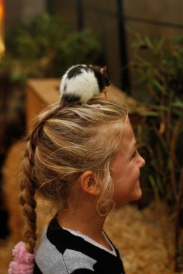 Petting Zoo returns with more fluffy friends