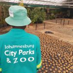 The Hollard Jura & Juma Will Be Good, Clean Fun, Thanks To Johannesburg City Parks & Zoo.