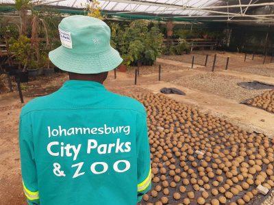 The Hollard Jura & Juma Will Be Good, Clean Fun, Thanks To Johannesburg City Parks & Zoo.