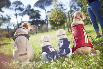 atFrits Dog Hotel & Daycare Teams up with Guide Dog Association SA