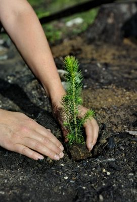 7 Ways You Can be a Green Hero