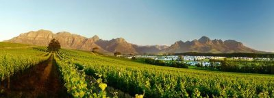 UK Success sees Kleine Zalze crowned best new world producer