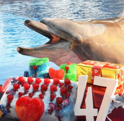 Celebrating A Very Special Dolphin