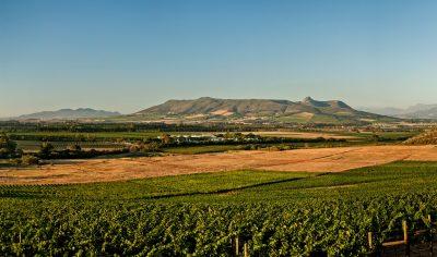 Paarl crowned as best terroir in South Africa